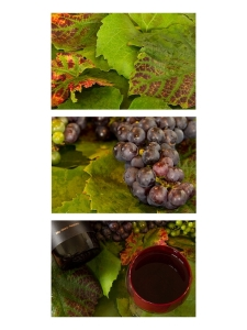 From Vine to Wine by Jan  Abernethy  (ProjIm)  [Judged Best ProjIm]