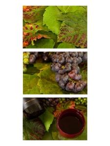 From Vine to Wine by Jan  Abernethy  (ProjIm)  [Judged Best ProjIm]