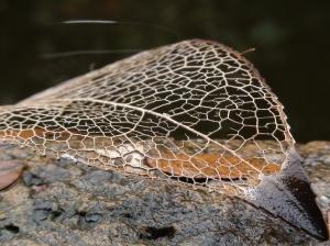 Bronze:  by Anne Nelson — Projim