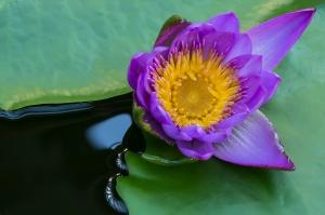 Purple Beauty by Jan Abernethy — Projim WINNER