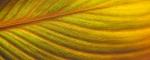 Dave Ferguson - Leaf swirl - Projim - HC